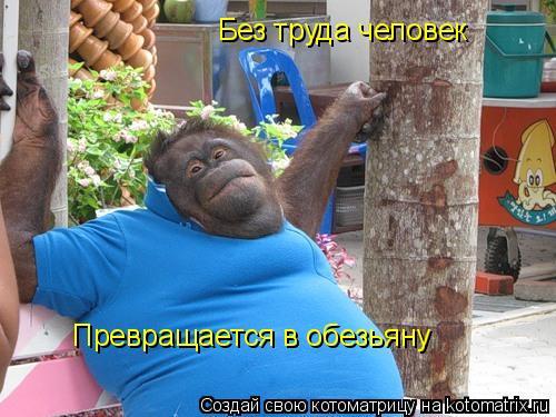 Котоматрица: Без труда человек  Превращается в обезьяну