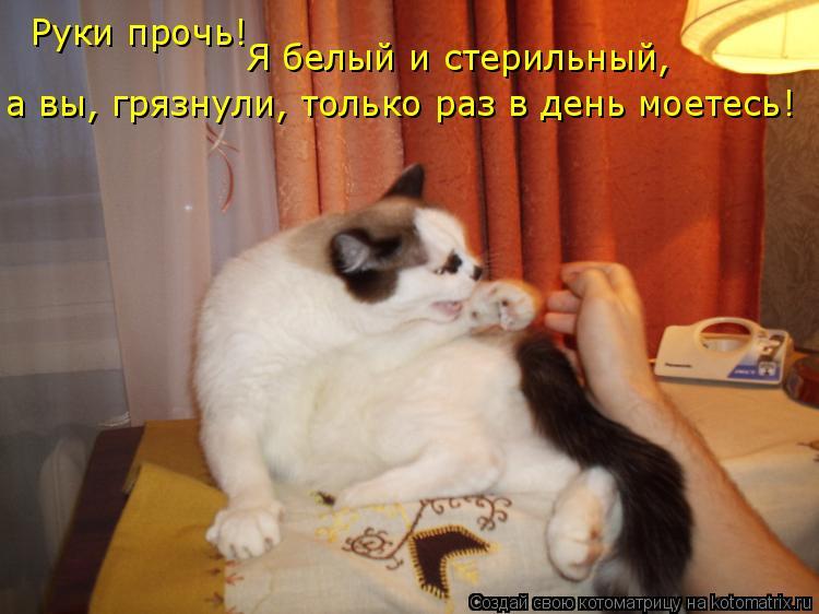Котоматрица: Руки прочь!  Я белый и стерильный,  а вы, грязнули, только раз в день моетесь!