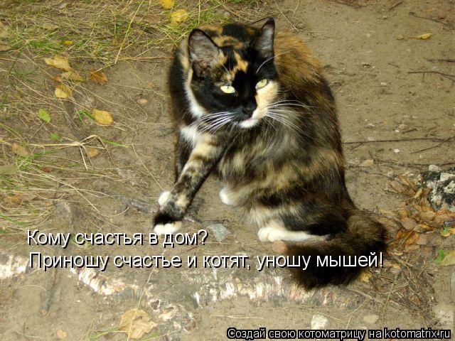 Котоматрица: Кому счастья в дом? Приношу счастье и котят, уношу мышей!