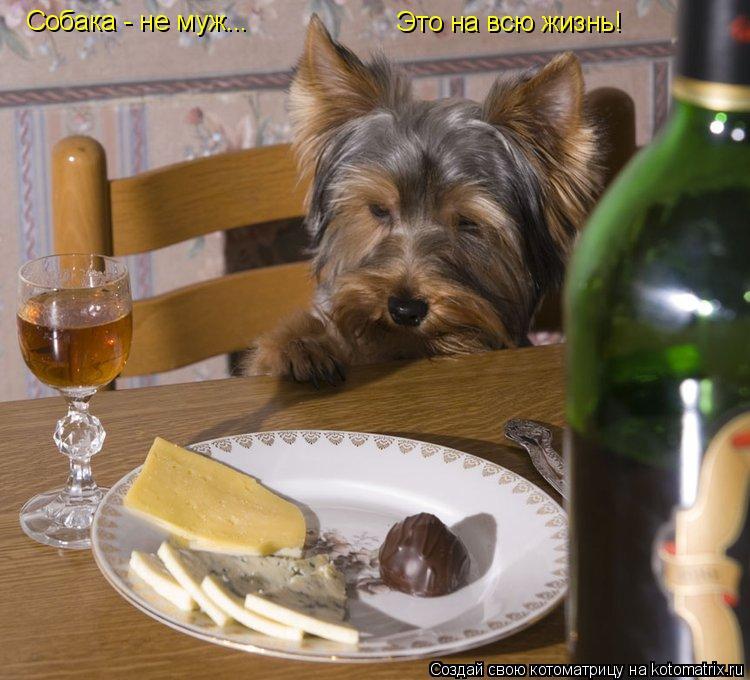 Котоматрица: Собака - не муж... Это на всю жизнь!