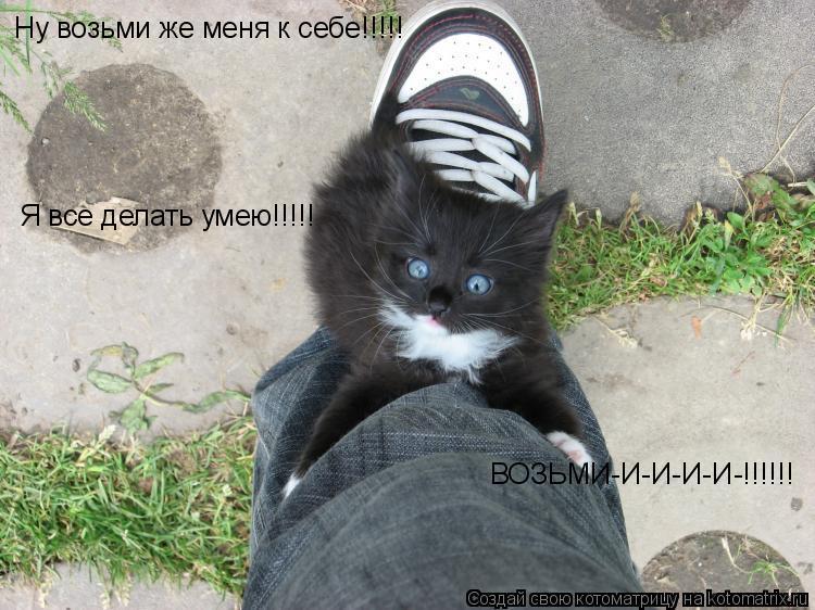 Котоматрица: Ну возьми же меня к себе!!!!! Я все делать умею!!!!!  ВОЗЬМИ-И-И-И-И-!!!!!!