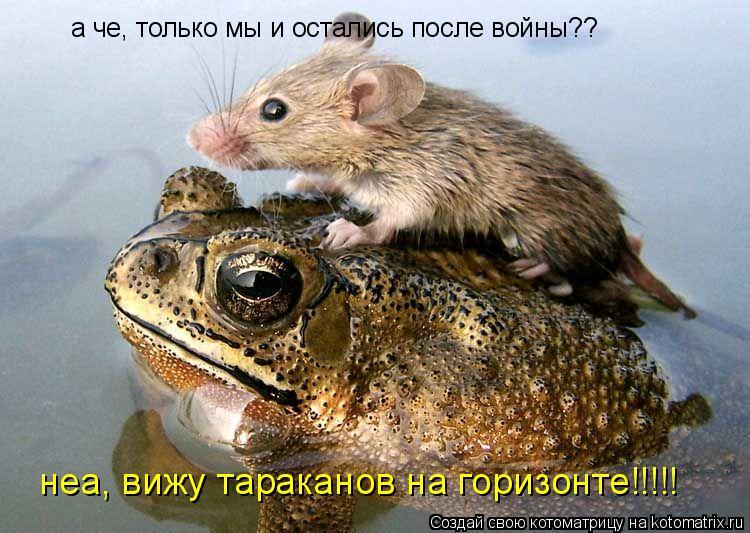 Котоматрица: а че, только мы и остались после войны?? неа, вижу тараканов на горизонте!!!!!