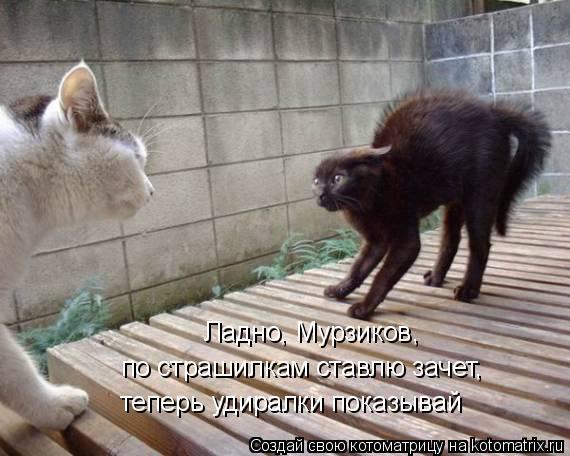 Котоматрица: Ладно, Мурзиков,  по страшилкам ставлю зачет, теперь удиралки показывай