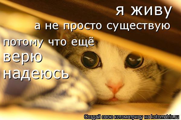 Котоматрица: я живу а не просто существую потому что ещё верю надеюсь