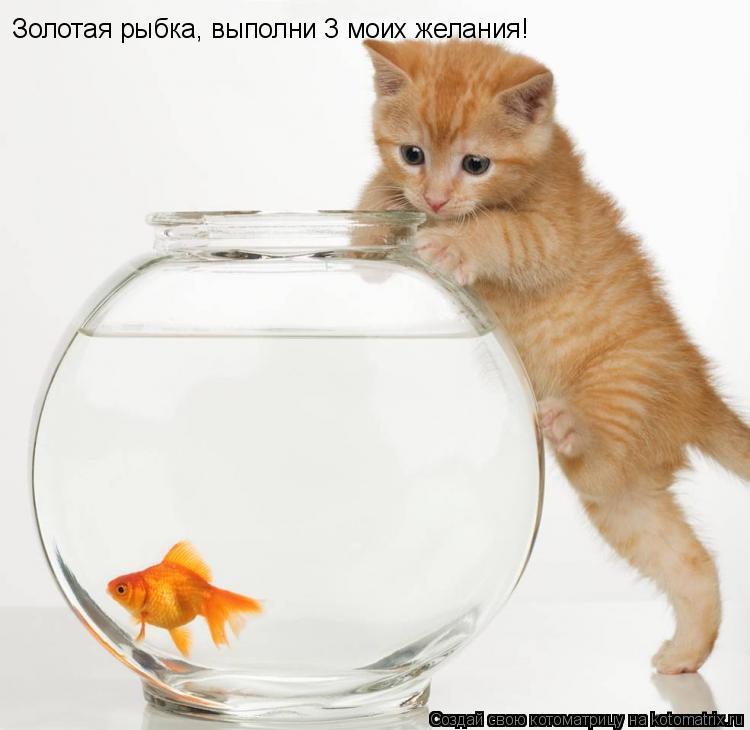 Котоматрица: Золотая рыбка, выполни 3 моих желания!