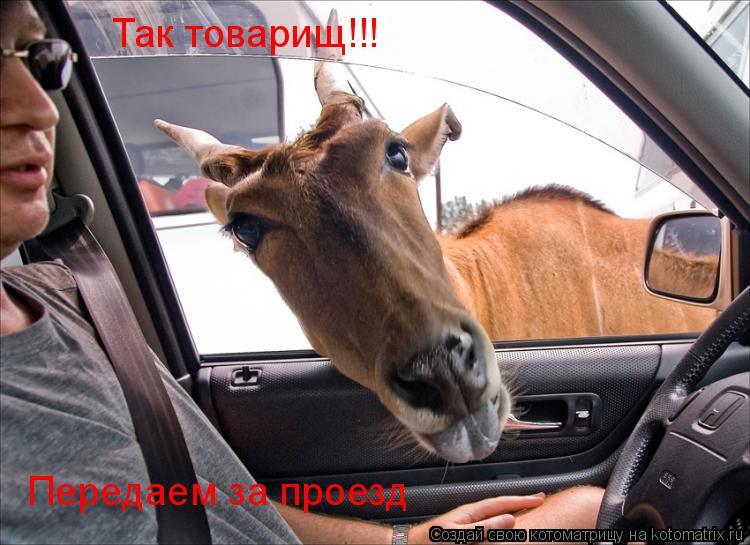 Котоматрица: Так товарищ!!! Передаем за проезд