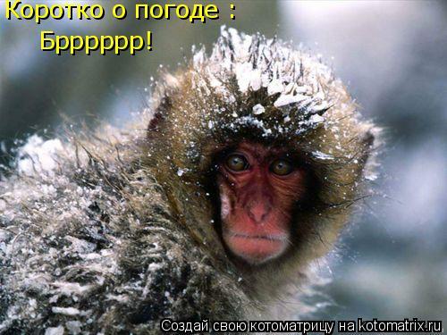 Котоматрица: Коротко о погоде : Брррррр!