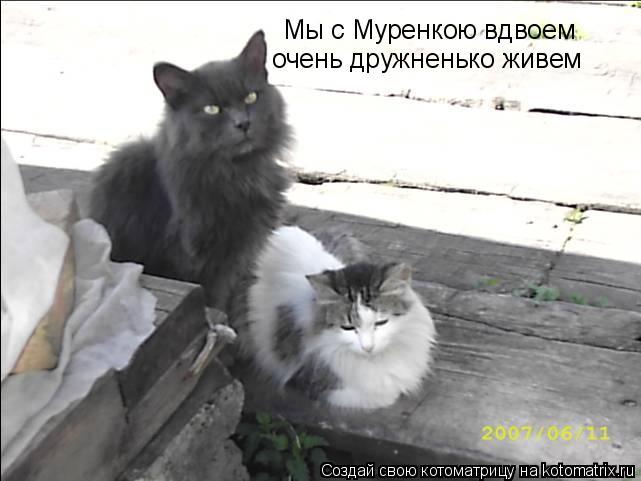 Котоматрица: Мы с Муренкою вдвоем очень дружненько живем
