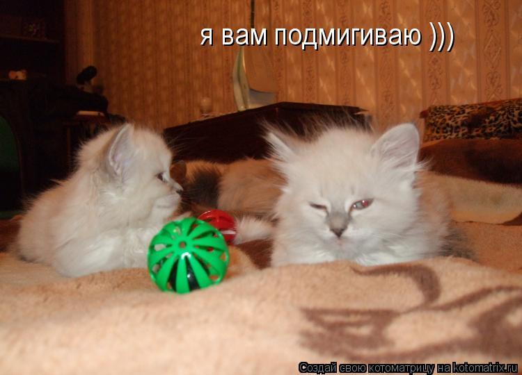 Котоматрица: я вам подмигиваю )))