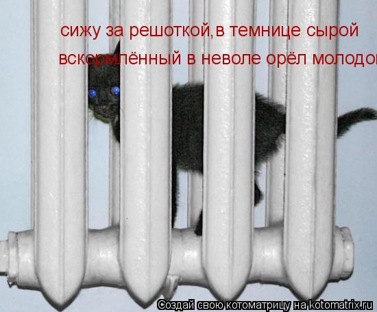 Котоматрица: сижу за решоткой,в темнице сырой вскормлённый в неволе орёл молодой...
