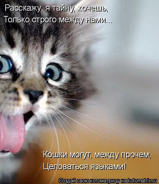 Котоматрица: Расскажу  я тайну, хочешь, Только строго между нами... Кошки могут, между прочем, Целоваться языками!