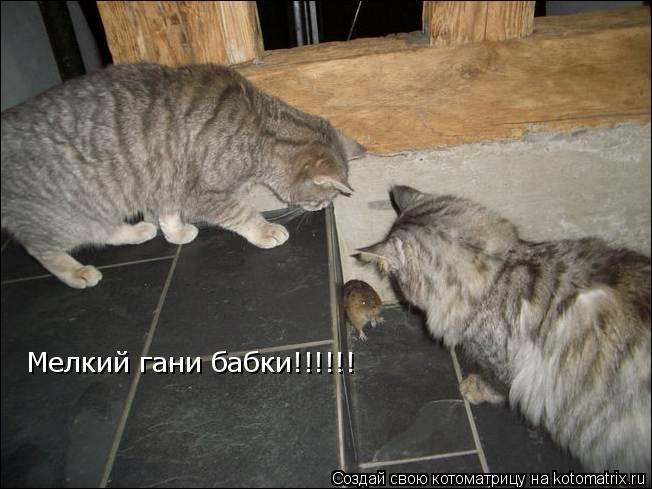 Котоматрица: Мелкий гани бабки!!!!!!