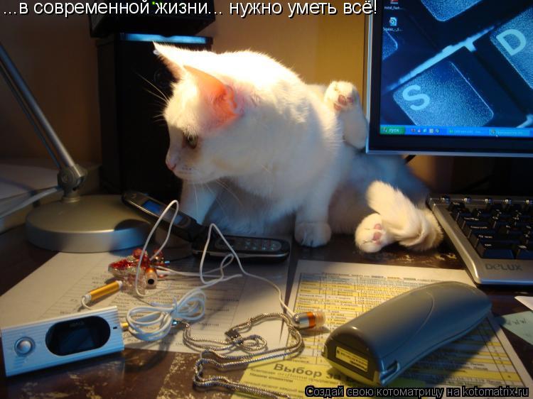 Котоматрица: ...в современной жизни... нужно уметь всё!