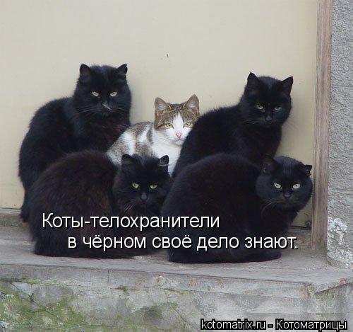 Котоматрица: Коты-телохранители   в чёрном своё дело знают.
