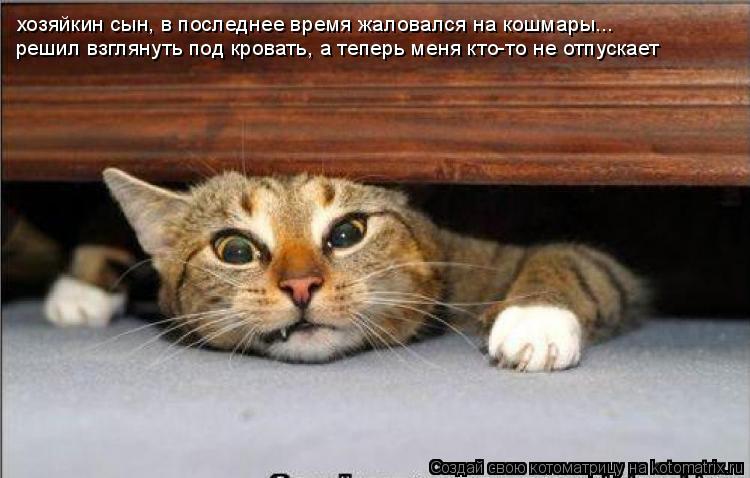 Котоматрица: хозяйкин сын, в последнее время жаловался на кошмары... решил взглянуть под кровать, а теперь меня кто-то не отпускает