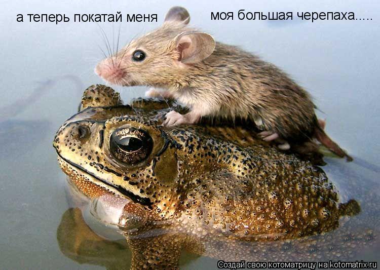 Котоматрица: а теперь покатай меня моя большая черепаха.....