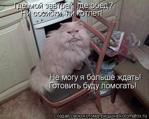 Котоматрица: Где мой завтрак, где обед? Ни сосиски, ни котлет! Не могу я больше ждать! Готовить буду помогать!