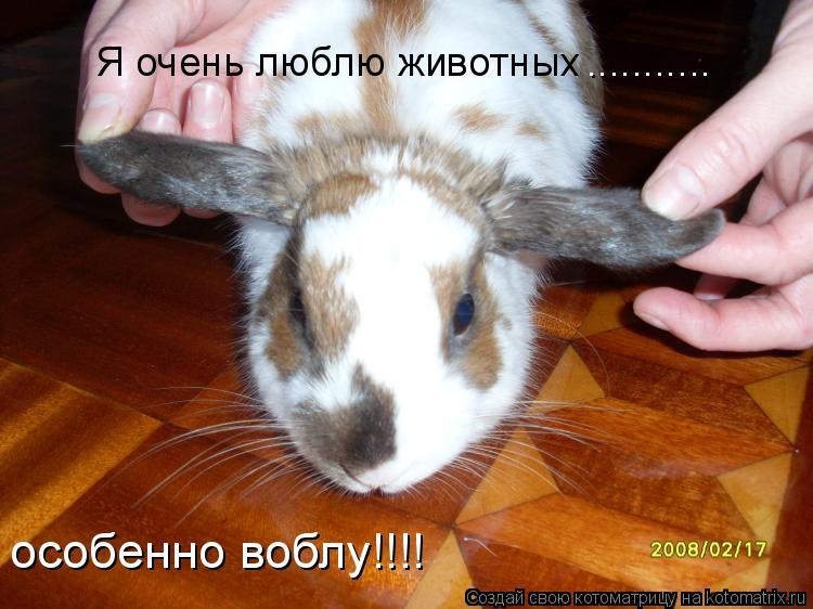 Котоматрица: Я очень люблю животных ........... особенно воблу!!!!