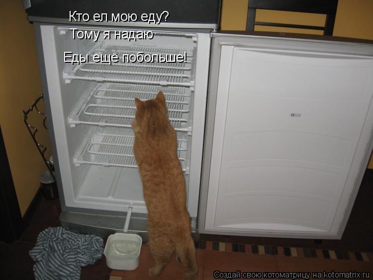 Котоматрица: Кто ел мою еду?  Тому я надаю   Еды ещё побольше!