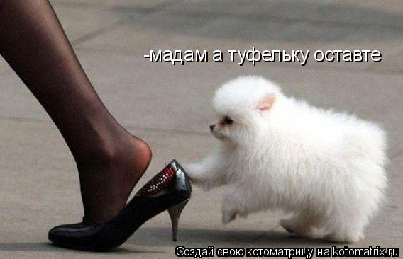 Котоматрица: -мадам а туфельку оставте