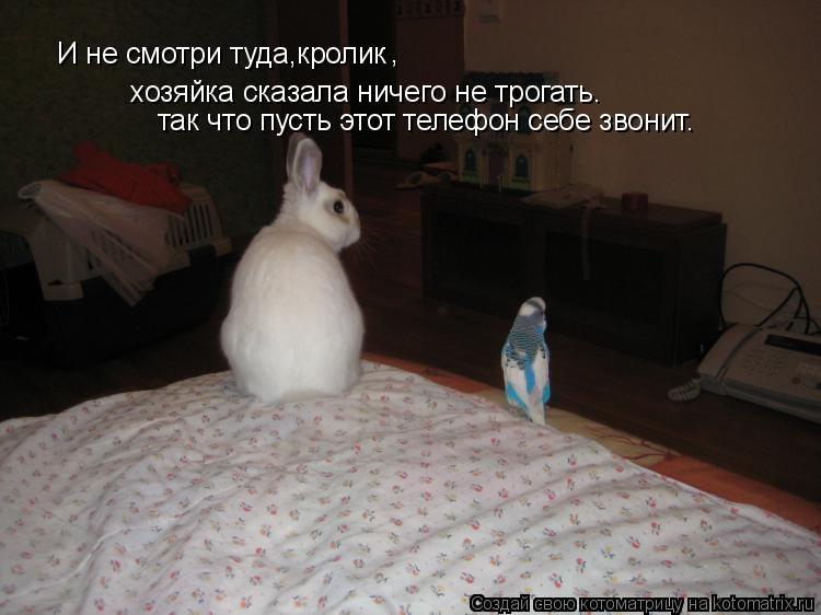 Котоматрица: И не смотри туда,кролик хозяйка сказала ничего не трогать. , так что пусть этот телефон себе звонит.