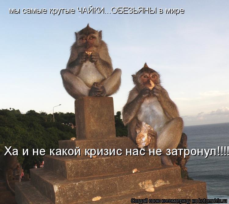 Котоматрица: мы самые крутые ЧАЙКИ...ОБЕЗЬЯНЫ в мире Ха и не какой кризис нас не затронул!!!!!