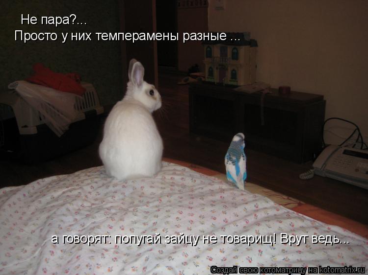 Котоматрица: а говорят: попугай зайцу не товарищ! Врут ведь... Не пара?... Просто у них темперамены разные ...