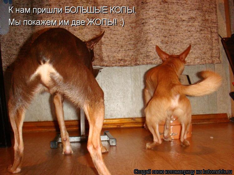 Котоматрица: К нам пришли БОЛЬШЫЕ КОПЫ, Мы покажем им две ЖОПЫ! :)