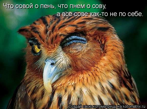 Котоматрица: Что совой о пень, что пнем о сову,   а все сове как-то не по себе.