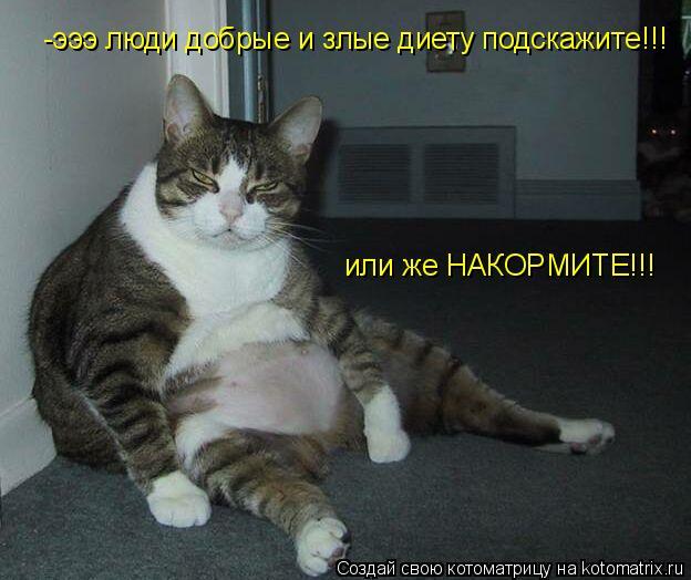 Котоматрица: -эээ люди добрые и злые диету подскажите!!! или же НАКОРМИТЕ!!!