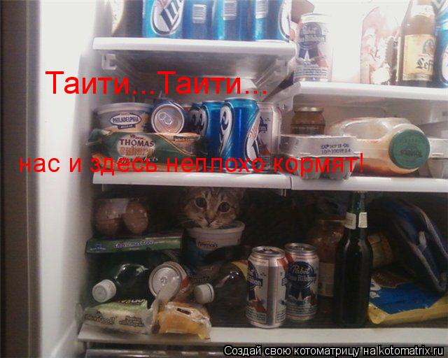 Котоматрица: Таити...Таити... нас и здесь неплохо кормят!