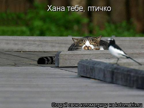 Котоматрица: Хана тебе, птичко