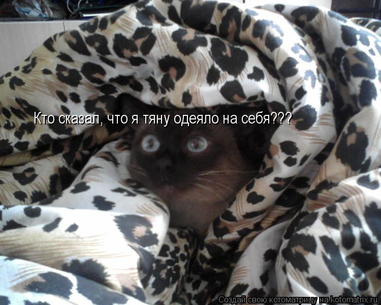 Котоматрица: Кто сказал, что я тяну одеяло на себя???