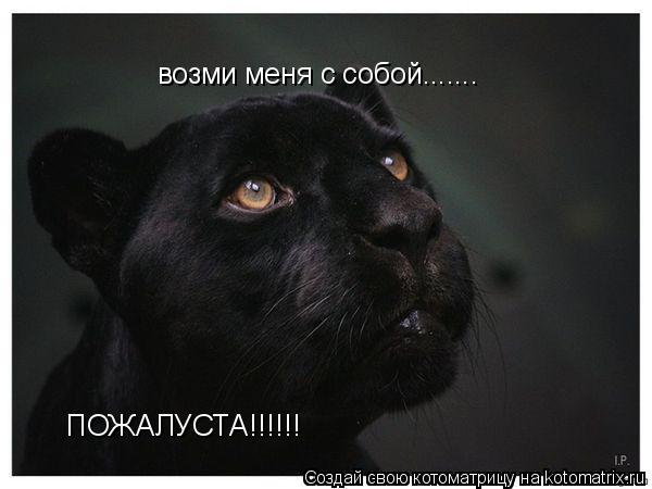 Котоматрица: возми меня с собой....... возми меня с собой....... ПОЖАЛУСТА!!!!!! ПОЖАЛУСТА!!!!!!