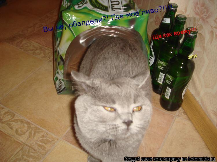 Котоматрица: Вы чё, обалдели?! Где моё пиво?!!!! Ща как врежу!!!  МЯУ!
