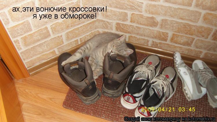 Котоматрица: ах,эти вонючие кроссовки ! я уже в обмороке!
