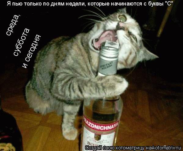 """Котоматрица: Я пью только по дням недели, которые начинаются с буквы """"С"""" среда,  суббота  и сегодня"""