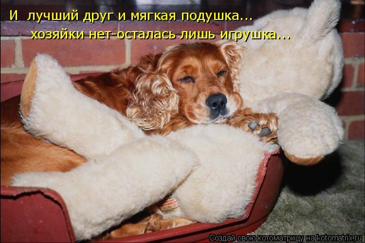 Котоматрица: И  лучший друг и мягкая подушка... хозяйки нет-осталась лишь игрушка...