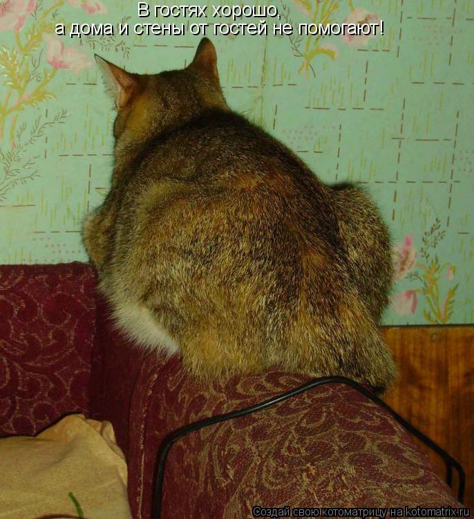 Котоматрица: В гостях хорошо, а дома и стены от гостей не помогают!