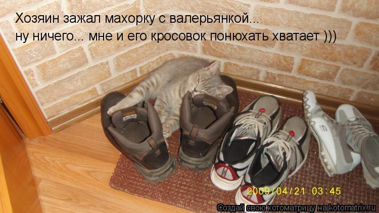 Котоматрица: Хозяин зажал махорку с валерьянкой... ну ничего... мне и его кросовок понюхать хватает )))