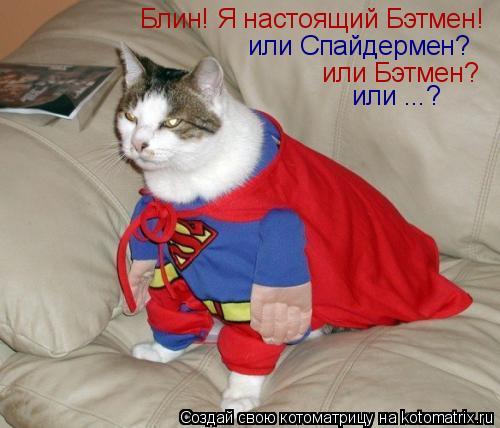 Котоматрица: Блин! Я настоящий Бэтмен!  или Бэтмен? или Спайдермен? или ...?