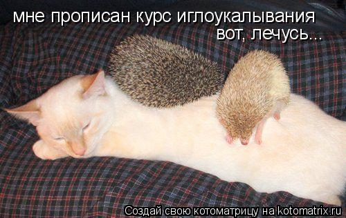 Котоматрица: мне прописан курс иглоукалывания вот, лечусь...