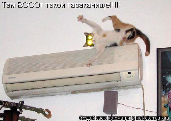 Котоматрица: Там ВОООт такой тараканище!!!!!