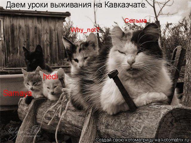 Котоматрица: Сельма Даем уроки выживания на Кавказчате.  Samaya hedi Why_not?