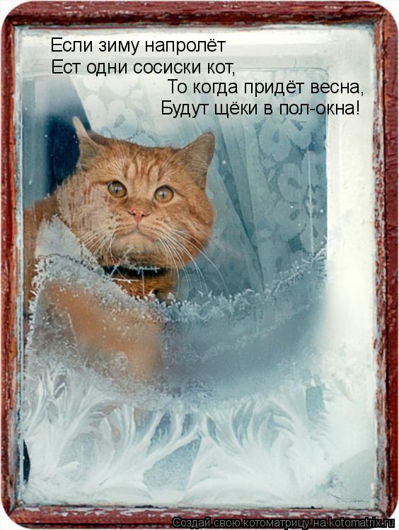 Котоматрица: Если зиму напролёт Ест одни сосиски кот, То когда придёт весна, Будут щёки в пол-окна!