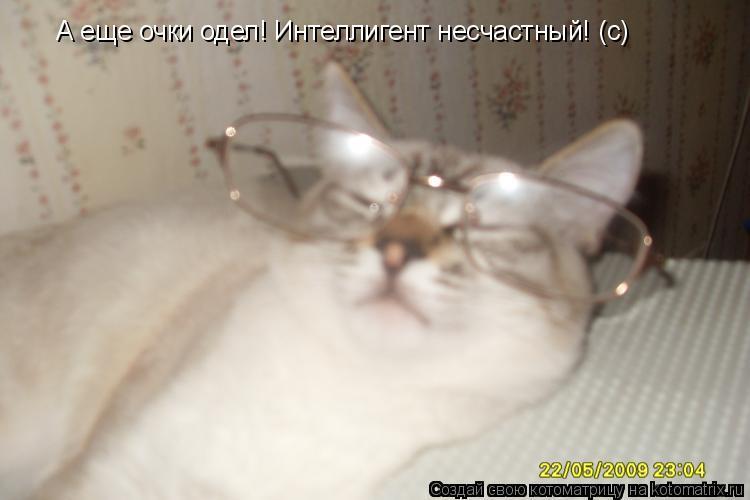 Котоматрица: А еще очки одел! Интеллигент несчастный! (с)