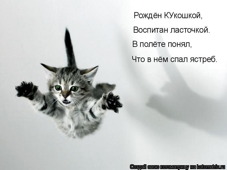 Котоматрица: Рождён КУкошкой, Воспитан ласточкой. В полёте понял, Что в нём спал ястреб.