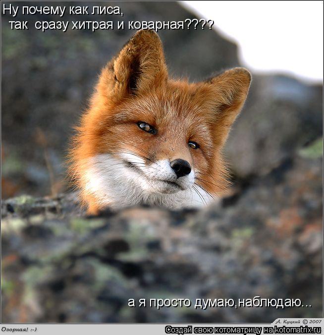 Картинки по запросу демотиватор хитрая лиса