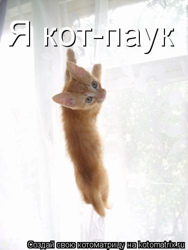 Котоматрица: Я кот-паук