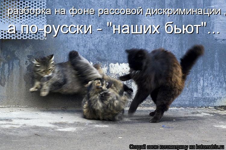 """Котоматрица: разборка на фоне рассовой дискриминации , а по-русски - """"наших бьют""""..."""
